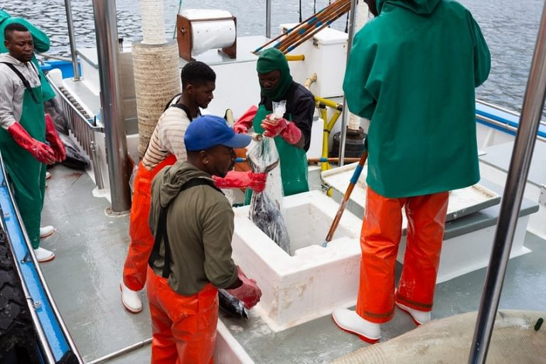 Our more humane 'ikejime' method for killing fish produces the highest quality catch